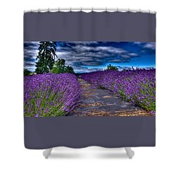 Shower Curtain featuring the photograph The Lavender Field by Thom Zehrfeld