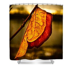 The Leaf Across The River Shower Curtain by Bob Orsillo