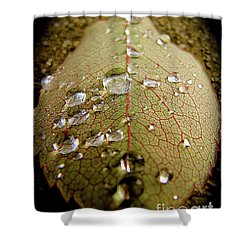 The Leaf After Rain Shower Curtain by CML Brown