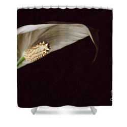 The Leaf Shower Curtain by Hannes Cmarits