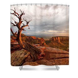 The Light On The Crooked Old Tree Shower Curtain
