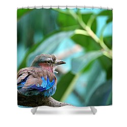 The Lilac Breasted Roller Shower Curtain by Karol Livote