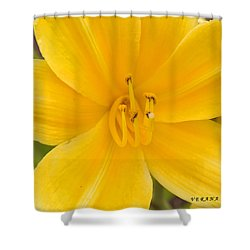 Shower Curtain featuring the photograph The Lily From Kentucky by Verana Stark