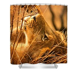 The Lion Muse Shower Curtain
