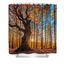 The Lord Of The Trees Shower Curtain