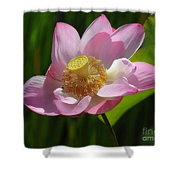 The Lotus Shower Curtain by Vivian Christopher