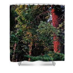 Shower Curtain featuring the photograph The Magic Hour by Natalie Ortiz