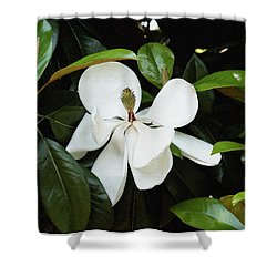 Shower Curtain featuring the photograph The Magnolia Bloom  by James C Thomas