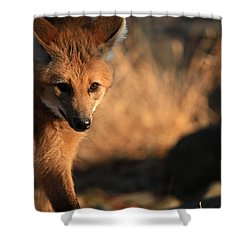 The Maned Wolf Shower Curtain by Karol Livote
