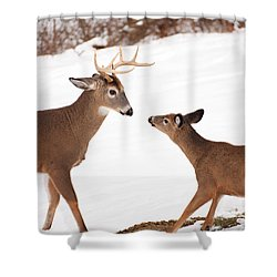 The Meet Shower Curtain by Karol Livote