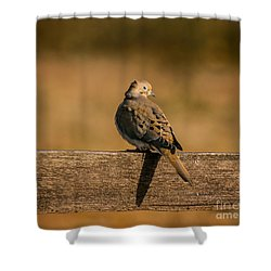 The Morning Dove Shower Curtain
