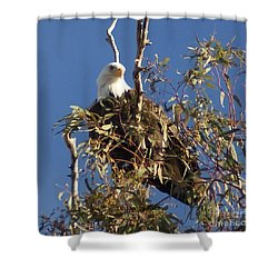 Shower Curtain featuring the photograph The Most Magnificant Bird by Debby Pueschel