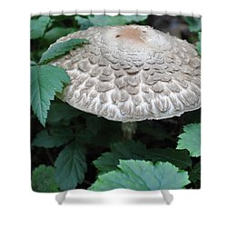 The Mushroom Shower Curtain by Kirt Tisdale