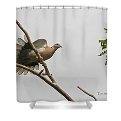 The New Dove In Town Shower Curtain by Tom Janca