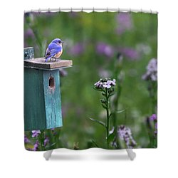 The New Landlord Shower Curtain by Lori Deiter