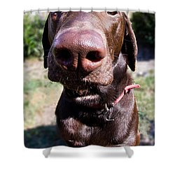 The Nose Knows Shower Curtain by Roger Wedegis