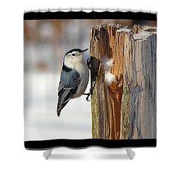 The Nut Cracker Shower Curtain by Davandra Cribbie