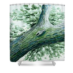 The Nuthatch Shower Curtain
