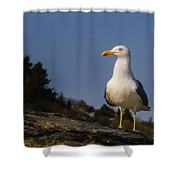 Shower Curtain featuring the photograph The Observer by Mark Myhaver