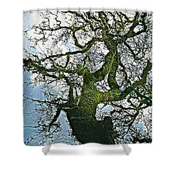 The Old Mossy Oak Tree Against Cloudy Sky Shower Curtain
