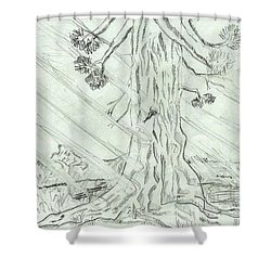 Shower Curtain featuring the drawing The Old Tree In Spring Light  - Sketch by Felicia Tica