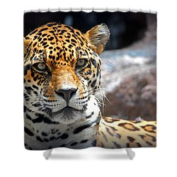 The Ole Leopard Don't Change His Spots Shower Curtain by Lynn Sprowl