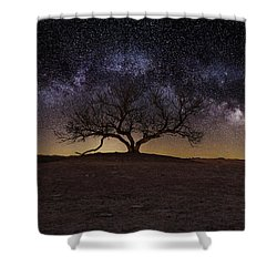 The One Shower Curtain