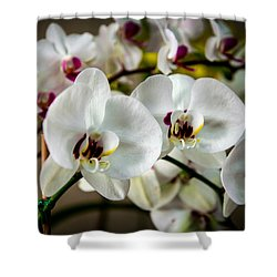 The Orchid Sisters And Backup Singers Shower Curtain by John Haldane