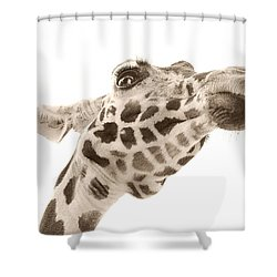 Shower Curtain featuring the photograph The Overseer by Dyle   Warren