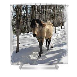 The Paso Fino Stallion Named Brio Shower Curtain by Patricia Keller