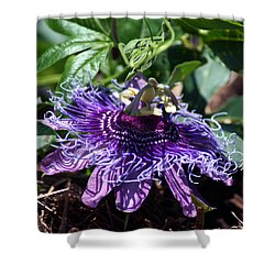 The Passion Flower Shower Curtain