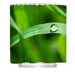 The Pearl - Featured 3 Shower Curtain by Alexander Senin