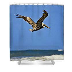 Shower Curtain featuring the photograph The Pelican And The Sea by DigiArt Diaries by Vicky B Fuller
