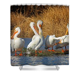 The Pelican Gang Shower Curtain