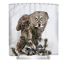The Perching Prince Shower Curtain by Heather King