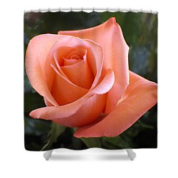 The Perfect Coral Rose Shower Curtain by Kurt Van Wagner