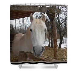The Picture Perfect Paso Fino Stallion Shower Curtain by Patricia Keller