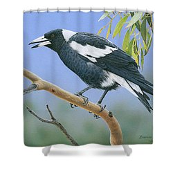 The Pied Piper - Australian Magpie Shower Curtain
