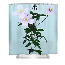 The Pink Clematis Shower Curtain by Steve Taylor