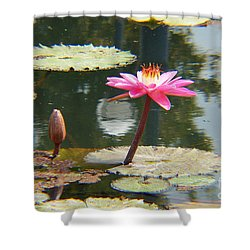 The Pink Water Lily With Lily Pads - One Shower Curtain