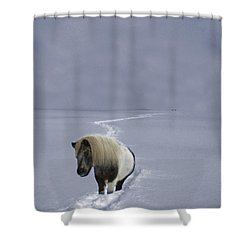 The Ponys Trail Shower Curtain