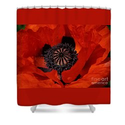 Shower Curtain featuring the photograph The Poppy Is Also A Flower by PJ Boylan