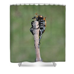 Shower Curtain featuring the photograph The Posing Beetle by Verana Stark