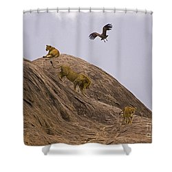 Shower Curtain featuring the photograph The Pride by J L Woody Wooden