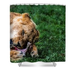 The Prince Is Hungry Shower Curtain by Hannes Cmarits