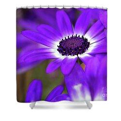 The Purple Daisy Shower Curtain by Sabrina L Ryan