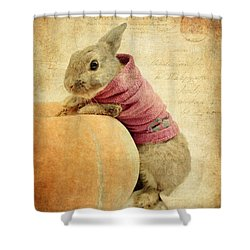 The Rabbit And The Pumpkin Shower Curtain