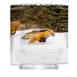 The Race Is On Shower Curtain