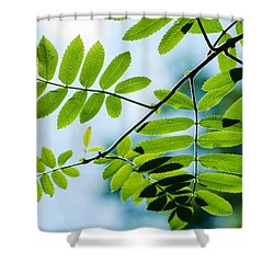 The Rain Has Stopped Shower Curtain by Alexander Senin