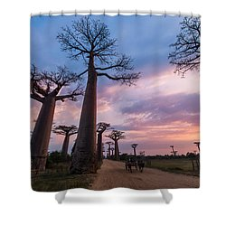 The Road To Morondava Shower Curtain